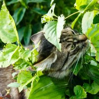 Тимошкин кот :: Андрей Иванов
