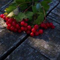 Красный цвет калины...... :: Ольга П