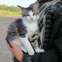 Ласковый котёнок :: Вера Щукина