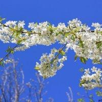 Цветочный хоровод-426. :: Руслан Грицунь