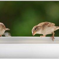 интересуюсь... :: linnud