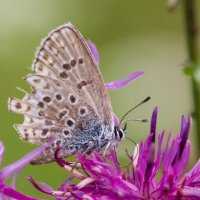 Бабочка :: Виктор Фролов
