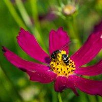 пчелка.. :: Светлана