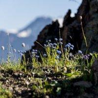 Цветы в горах :: Alexey alexeyseafarer@gmail.com
