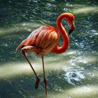 Розовый фламинго :: Владимир Бровко