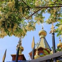 Над золотыми куполами. :: Валентина ツ ღ✿ღ