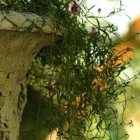 Парковая каменная ваза. Период свободомыслия. :: Ирина Сивовол