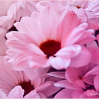 Цветик-семи цветик :: Алена Засовина