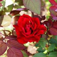 В розовом интерьере :: Damir Si