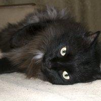 My cat Kyza :: Anastasia Nedosekina