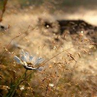 Август :: Мила Солнечная