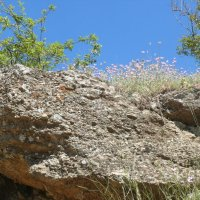 И на камнях растут цветы :: Елена Елена