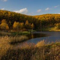 лесное озеро :: Ирина Пантелеева