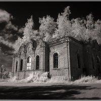И на камнях растут деревья. :: Михаил Розенберг
