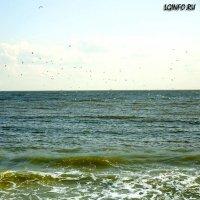 Азовское море :: Наталья (ShadeNataly) Мельник