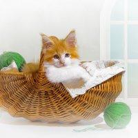 С котёнком в корзинке :: Светлана Л.