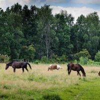 Ходят кони... :: Людмила Финкель