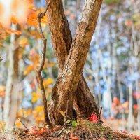 Осенний лес :: Эдуард Куклин