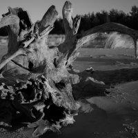 Nature Morte :: Ольга Блум