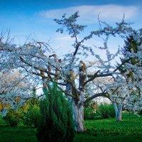 Весны пора :: Genych