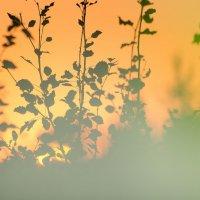 краски уходящего заката :: Алексей -