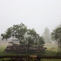 На дворе туман :: Александр