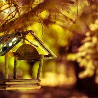 Кормушка в гагаринском парке :: Петр Корунец