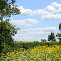 Начало лета. :: оля san-alondra