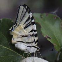 бабочка на шаре :: Вадим Решетов