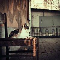 Весенний Котя :: Ольга сташевски