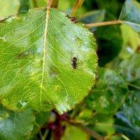 мурашка на зеленом поле :: Александр Прокудин