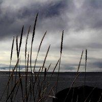 Белое море :: Татьяна Богачева