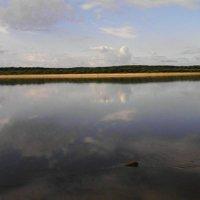 Одинокий топляк на реке Вымь. :: Николай Туркин
