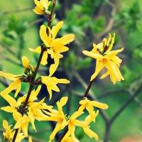 Весна.. :: Дарья Маковей