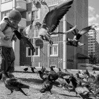 Летите голуби, летите! :: Анна Санжарова