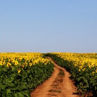 Дорога тысячи солнц :: Damir Si