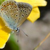 Бабочка :: NICKIII Михаил Г.