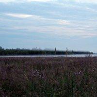Вечерний туман над полем :: Татьяна