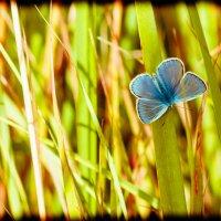 бабочка :: Андрей Иванов
