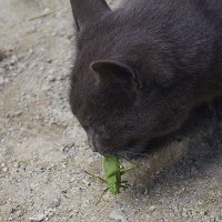 The death of a grasshopper :: A. SMIRNOV