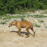 Собака :: Вера Щукина