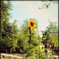 цветы жизни :: Ольга (Кошкотень) Медведева