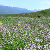 весна в горах :: Денис В.