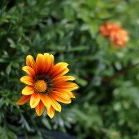 просто цветок :: Евгений Никифоров