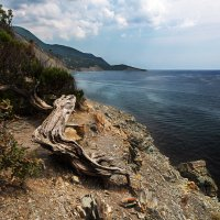 Коряга на берегу :: Дмитрий