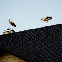 Аисты на моей крыше! :: Наталия Зыбайло