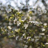 Цветочный хоровод-460. :: Руслан Грицунь