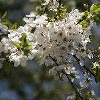 Цветочный хоровод-456. :: Руслан Грицунь