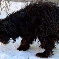 Собачьи стаи на улицах Луганска, чего же ждать от бездомных животных :: Наталья (ShadeNataly) Мельник