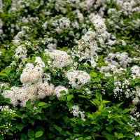 Spring flowers :: Sergey Sergaj